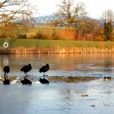 designreaction.co.uk - National Botanical Garden of Wales 04